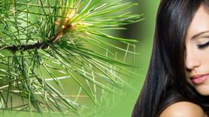 Для волос эфирное масло кедра признается не просто полезным, а даже необходимым