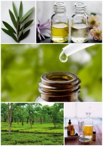 В масле чайного дерева много полезных веществ