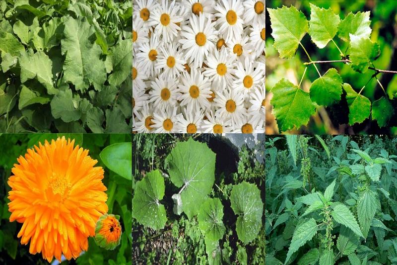 Хорошо помогает крапива в сочетании с другими полезными растениями