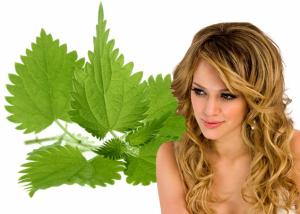 Крапива для укрепления корня волос